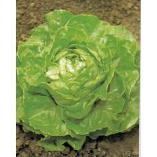 Lettuce Seeds, Attrazione