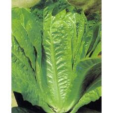 Romaine Lettuce Seeds, Lentissima Montare 3