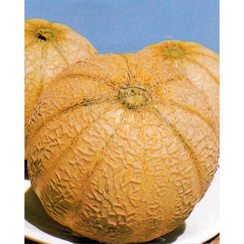 Melon Seeds, Arancino