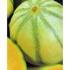 Melon Seeds, Charentais