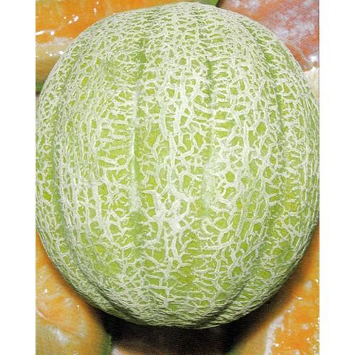 Melon Seeds, Hale's Best