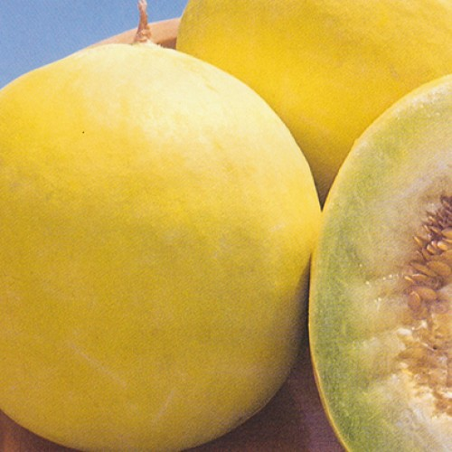 Melon Seeds, Honey Dew Orange Flesh
