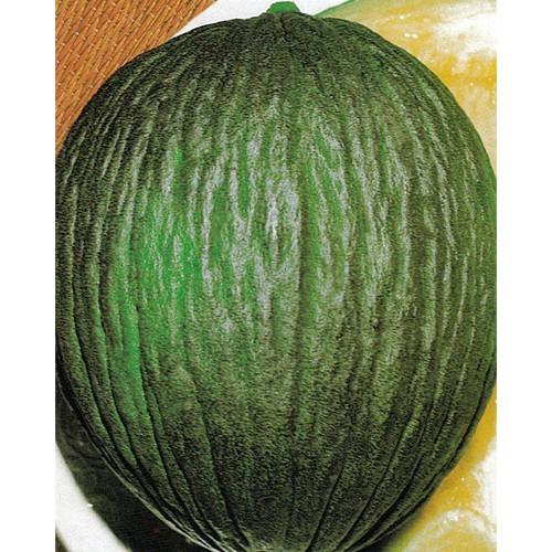 Melon Seeds, Napoletano Verde
