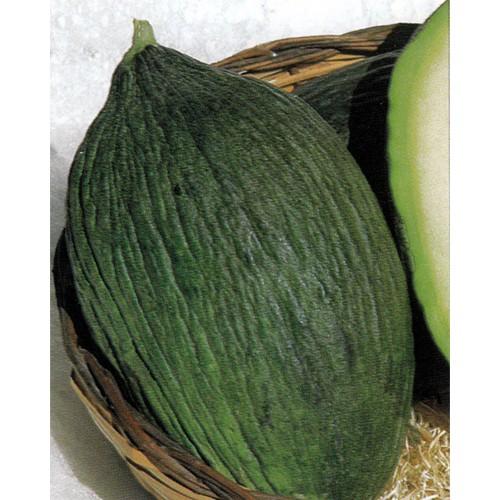 Melon Seeds, Valenciano Verde Precoce (Rochet)