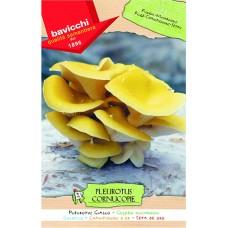 Mushroom Spawn, Golden