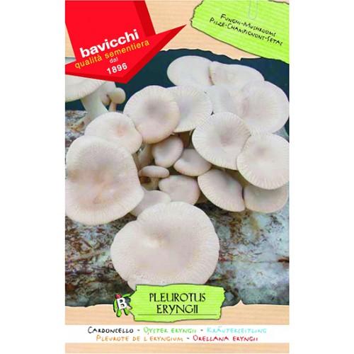 Mushroom Spawn, Oyster Eryngii