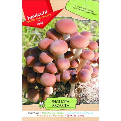 Mushroom Spawn, Poplar
