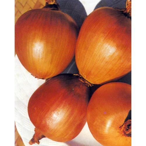 Onion Seeds, Ramata di Milano