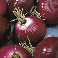 Onion Seeds, Italian Red Round