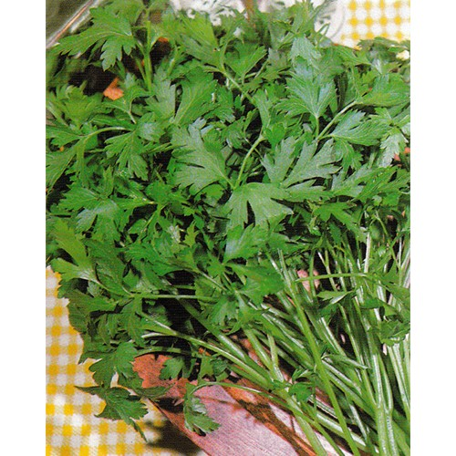 Parsley Seeds, Plain or Single 2
