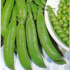 Bush Pea Seeds, Progress 9
