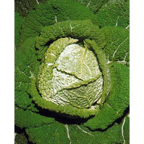 Savoy Cabbage Seeds, d'Aubervilliers