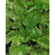 Spinach Seeds, Winter Giant ORGANIC