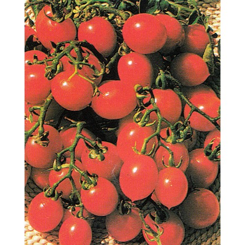 Tomato Seeds, A Grappoli Da Inverno