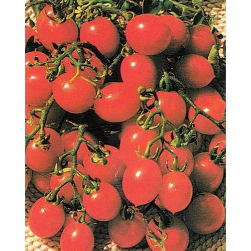 Tomato Seeds, Italian Red Cherry