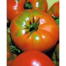 Tomato Seeds, Pantano Romanesco