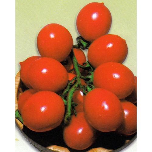 Tomato Seeds, Principe Borghese