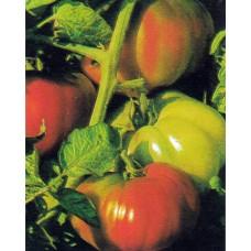 Tomato Seeds, Rhodia Professional Hybrid