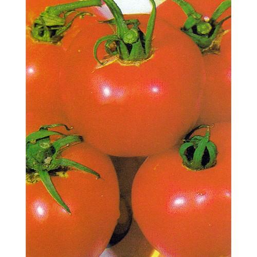 Tomato Seeds, Brandywine Pink, Organic