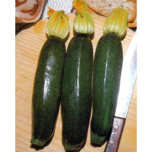 Zucchini Seeds, Black Beauty ( Verde Di Milano)