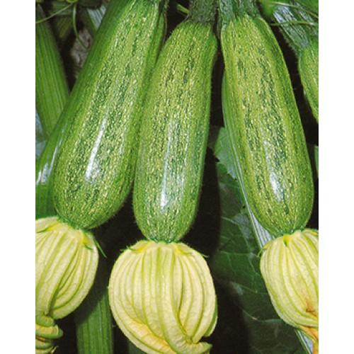 Zucchini Seeds, Greyzini F1 Hybrid