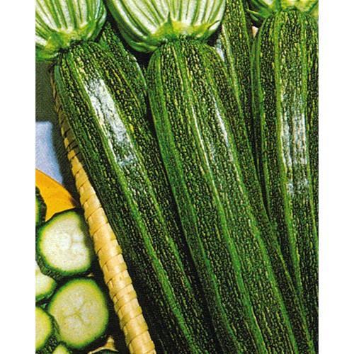 Zucchini Seeds, Striato di Napoli