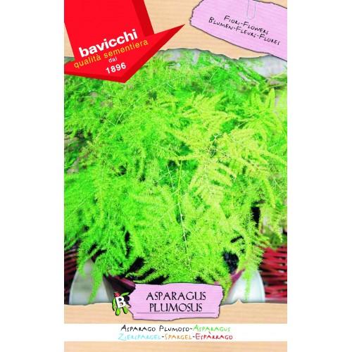Asparagus Fern Seeds, Plumosus