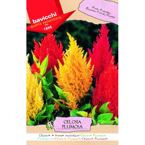 Celosia Seed, Plumed Triumph Exposition Mix