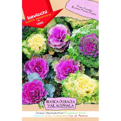 Cabbage Flowering Kale Seeds