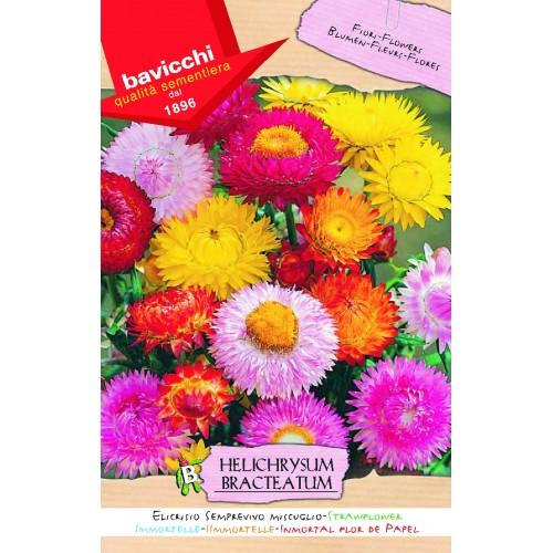 Strawflower Seeds, Immortal Mix