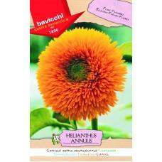 Sunflower Seeds, Velvet Queen