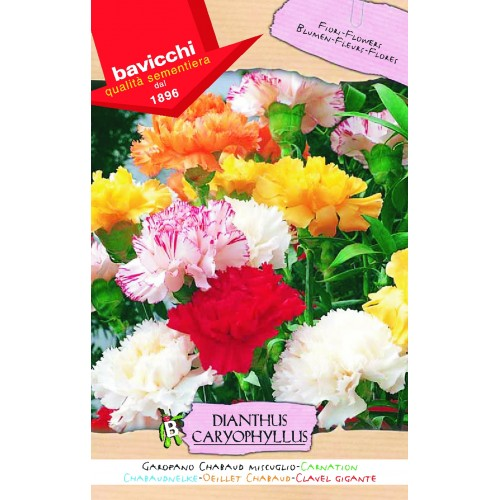 Carnation Seed Giant Chaboud Mix