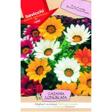 Gazania Seeds, Treasure Flower Mix