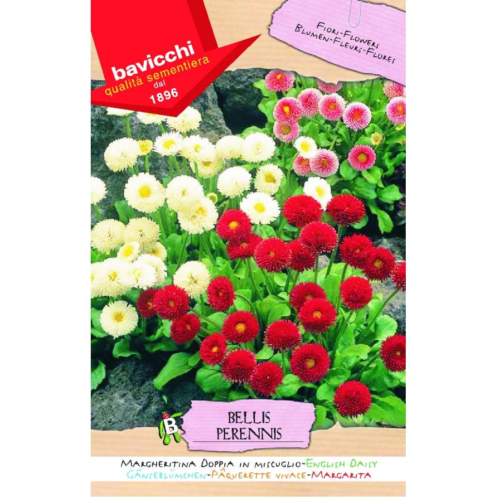 English daisy seeds doubles mix izmirmasajfo