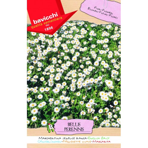 English Daisy Seeds Single Meadow