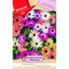 Mesembryanthemum Seeds, Livingstone Daisy Mix