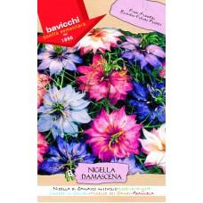 Nigella Seeds, Love-in-a-mist