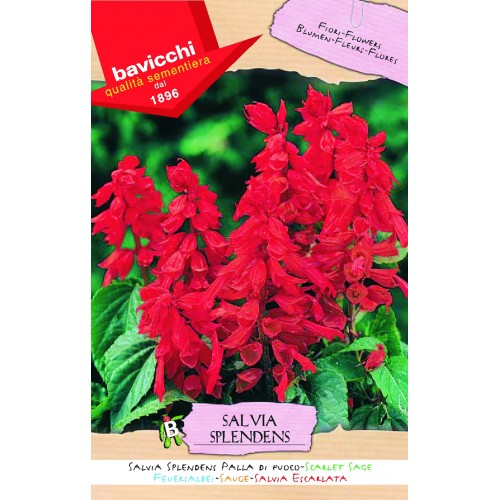 Salvia Seeds, Scarlet Sage Ball Of Fire