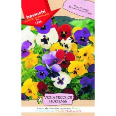 Pansy Seeds, Giants Mix