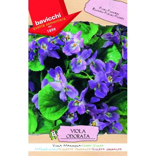 Violets Seeds, Sweet