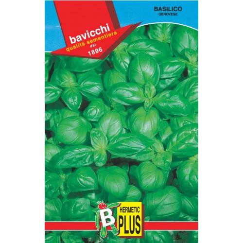 Basil Seeds, Genovese Italiano Classico