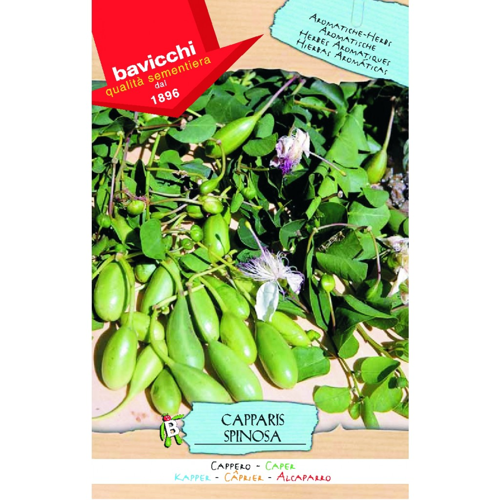 how to grow capers from seed