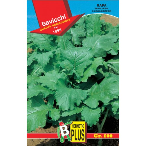 Turnip Greens Seeds, Senza Testa