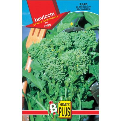 Rapini - Broccoli Raab Seeds, Del Trasimeno