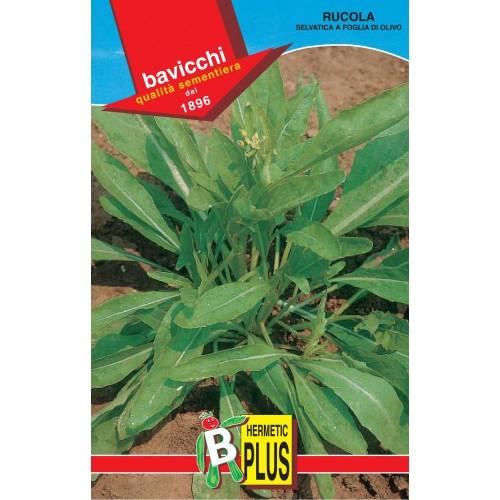 Arugula Seeds, Wild Olive Leaf
