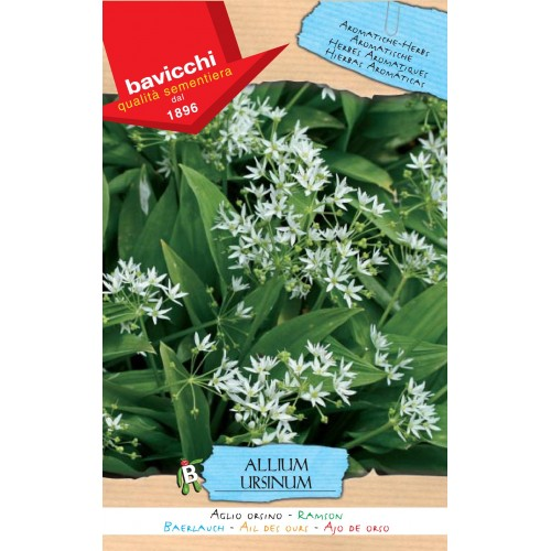 Ramsons or Bear's Garlic Seeds