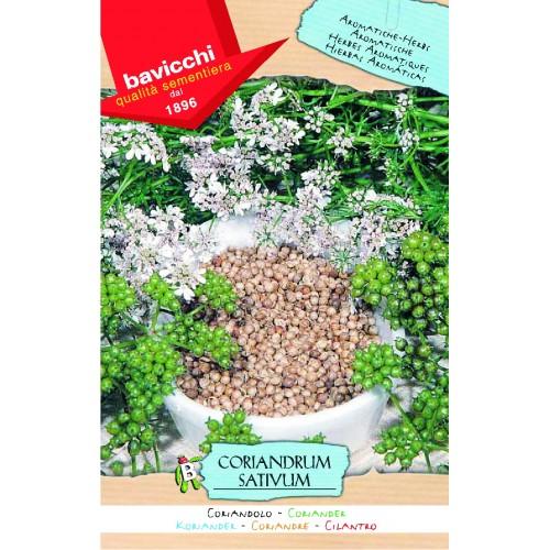 Coriander of Morocco / Cilantro Seeds