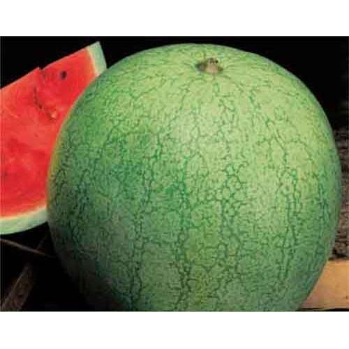 Watermelon Seeds, Grey Belle